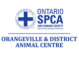 2019 Cupcake Day Ontario SPCA Orangeville & District Animal Centre