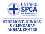 2019 Cupcake Day Ontario SPCA SD&G Animal Centre