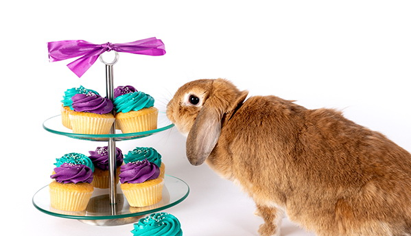 Bunny with Cupcakes